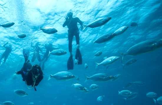 Schnorcheln & Tauchen Corralejo Fuerteventura