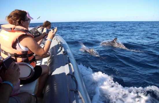 Wale und Delfine beobachten Morro Jable Fuerteventura