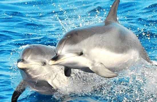 Delfin Katamaran Select Fuerteventura